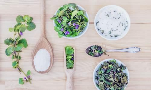 4 Kelompok Tumbuhan Liar Termasuk Obat Herbal