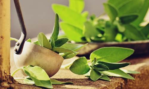 Contoh Daftar 48 Tumbuhan Liar Termasuk Obat Herbal - Herb.co.id